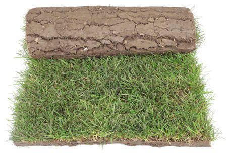 sod: Grass Carpet Roll for Landscaping Isolated on White Background