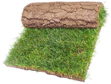 Grass Carpet Roll Isolated on White Background photo