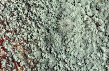 microscopic: Green Mold on Orange Peel