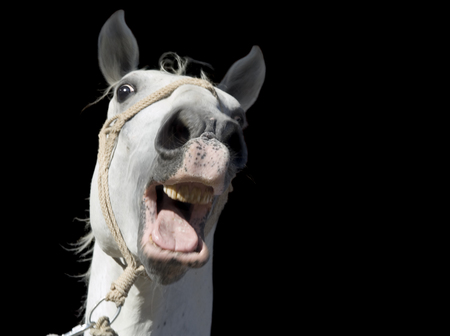 黒の背景上に分離されておびえたの白い馬