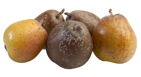 Rowan Berry Fruit, Sorbus Domestica