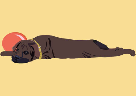 mastiff: An illustration of tired mastiff puppy having a rest near by the ball