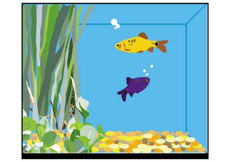 fishtank: an illustration of a square fishtank with two fish, seaweeds and stones inside.