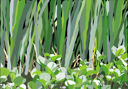 variety: an illustration of variety of leaves and flowers on the marshland.