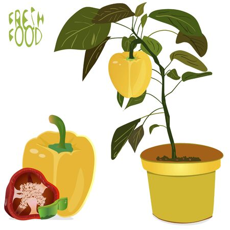 pot leaf: an illustration of a background of fresh whole and different sliced sizes of peppers, with blossomin pepper tree with small yellow pepper in flower pot, with a Fresh food sign