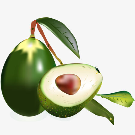 avocados: an illustration of two isolated avocados: whole on a branch with leaves and a half with a shiny seed