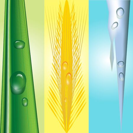summery: illustration of three seasonal backgrounds, wintery with icicle, spring scene with barley and summery with grass blade. All with water drops on individual transparent backgrounds Illustration