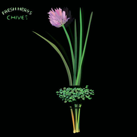 chive: a vector illustration of chopped chive plant, with flower, seasoning and bottom part, with fresh herb sign