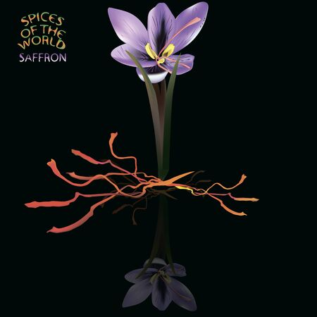 saffron: a vector illustration of a mesh made saffron flower, leaves and ready us a food ingridients saffron seeds, with fresh spice logo Illustration