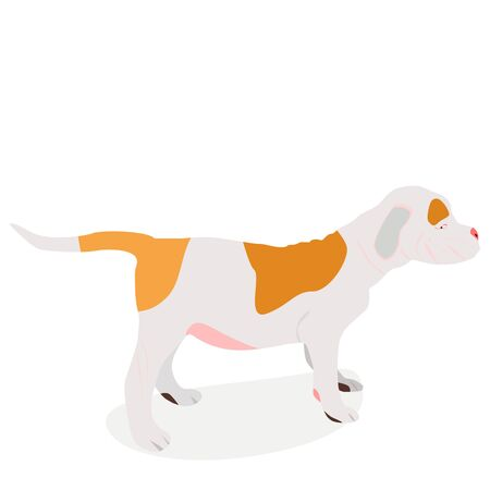 bulldog puppy: an isolated vector illustration of an american bulldog puppy