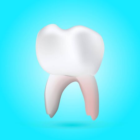 carious cavity: a vector illustration of a 3-D healthy molar tooth on a background with reflection