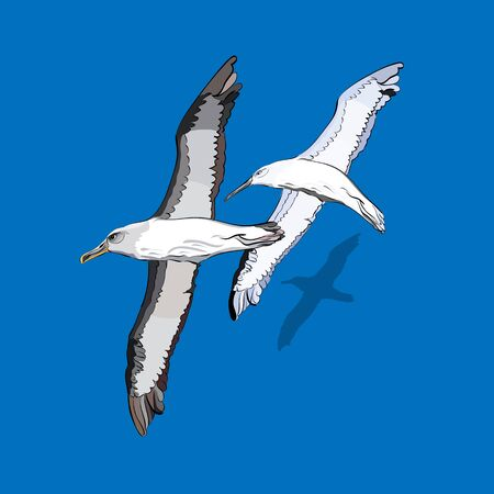 albatross: vector illustration of a flock of birds