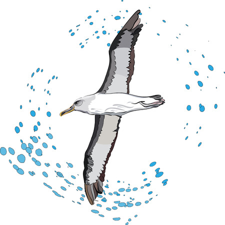 sea bird: vector illustration of flying sea bird and outlined drops of water