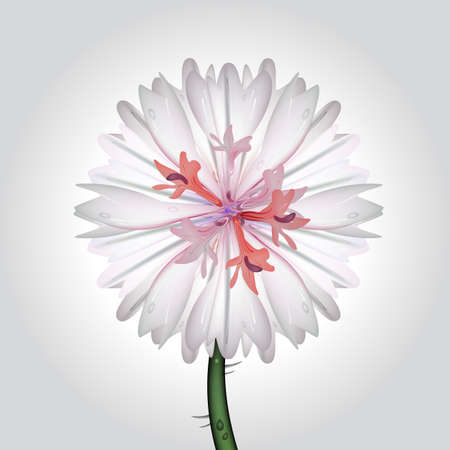 water weed: vector illustration of a cornflower, blossoming wild plant with some water drops