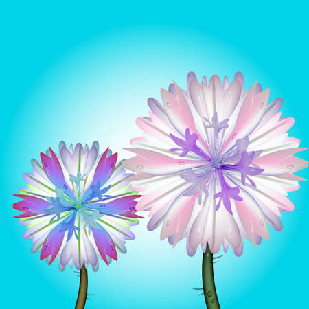 cornflowers: vector illustration of a couple of cornflowers, blossoming in the field, with water drops on the petals