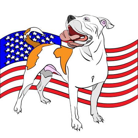 vector illustration of hand-drawn, outlined american bulldog in front of waving american flag Illustration
