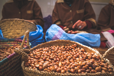 Moroccan women working with argan seeds to extract argan oil. Banque d'images