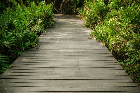 Old wooden floor along lush green plants in the tropical forest in summer. Banco de Imagens