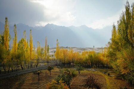 Nature landscape view of morning sunlight lit colorful poplar trees against Katpana cold desert and Karakoram mountain range. Autumn season in Skardu, Gilgit Baltistan, Pakistan. Archivio Fotografico