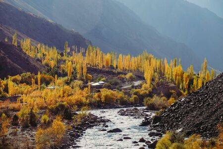 Beautiful nature landscape view of yellow leaves trees in autumn season along Gupis Ghizer valley in Hindu Kush mountain range, Gilgit Baltistan, Pakistan. Selective focus on background. Banque d'images