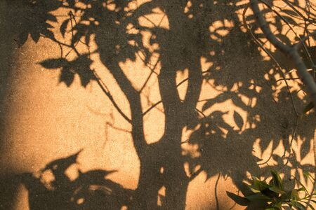 Abstract golden hour natural yellow orange sunlight sunshine in tropical garden. Black and brown shadow of nature leaves and branch tree against cement wall background.