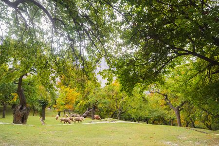 Nature landscape view of green field park garden organic orchard in Altit Hunza valley. Beautiful country Eco-living summer autumn scenery in Gilgit Baltistan, Pakistan