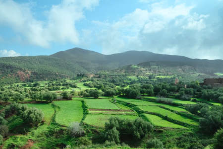 Landscape view of countryside green agriculture crop field in spring summer against mountain and blue sky in rural Morocco