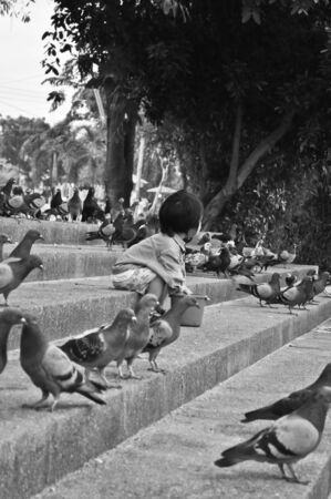 crowd tail: pigeons eating bread on the stairs