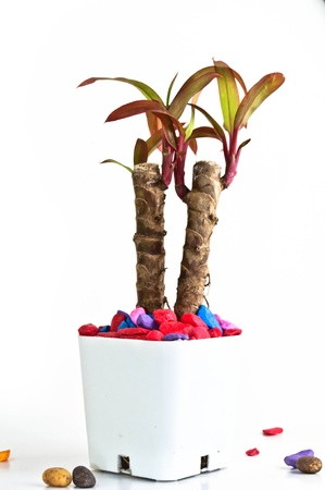 A small plant in Pot with many colorful rock photo