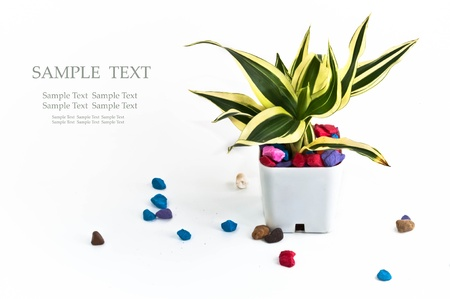 A small plant in Pot with many colorful rock Stock Photo - 17174180