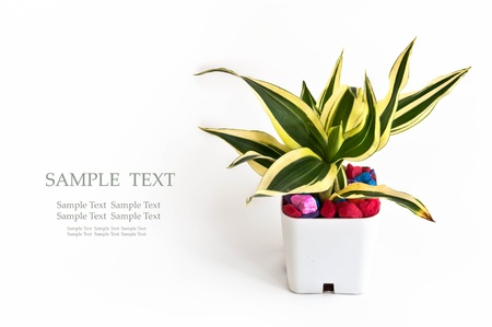A small plant in Pot with many colorful rock Stock Photo - 17174179
