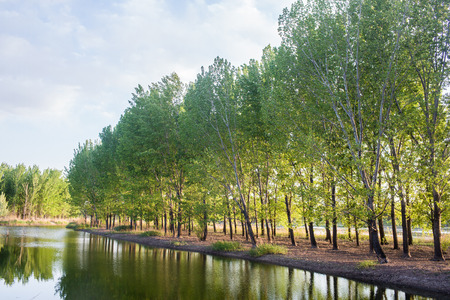 riverside trees: The reflection of the summer river forest