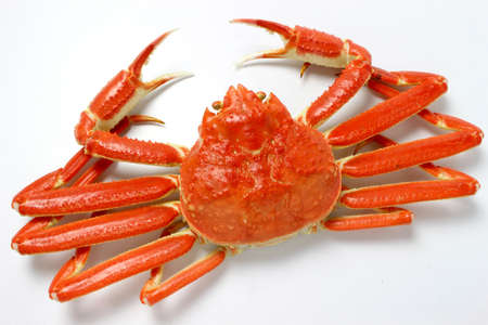 Snow crab Stockfoto