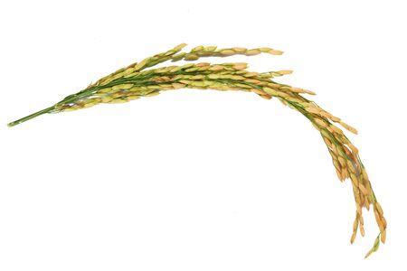 Rice closeup on white background Foto de archivo