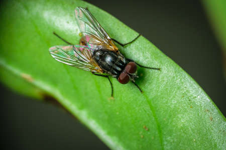 Isolated domestic fly sitting on a green leaf
