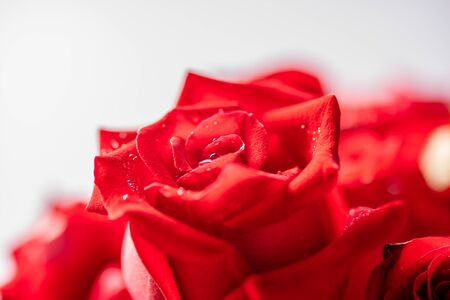 Close up of red rose bouquet in the vase
