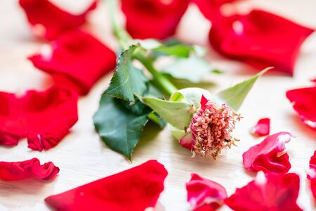 Close up of red rose petal Stockfoto