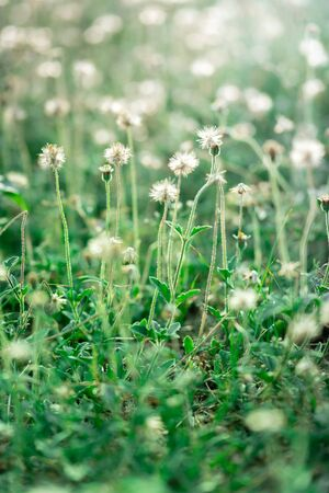 Close up of small flowers in the field on bokeh background in the morning