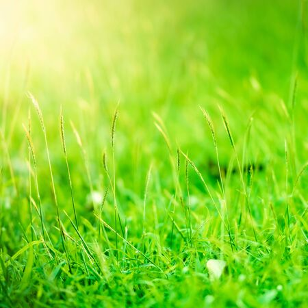 Close up of green grass flowers abstract background