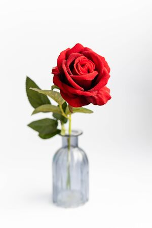 Close up of red roses on white background Stockfoto