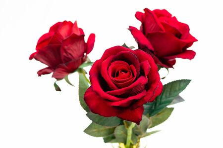 Close up of red roses on white background