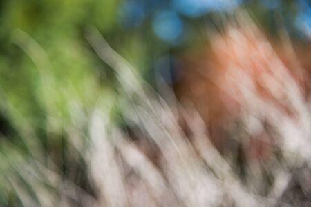 twigs: blur dry twigs background
