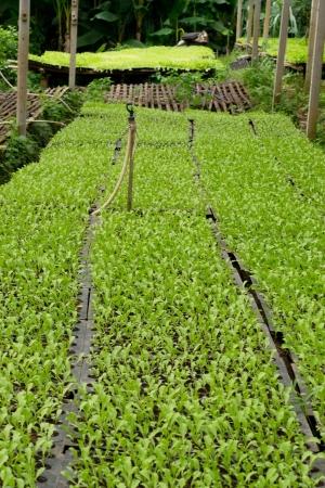 seeding: seeding farm