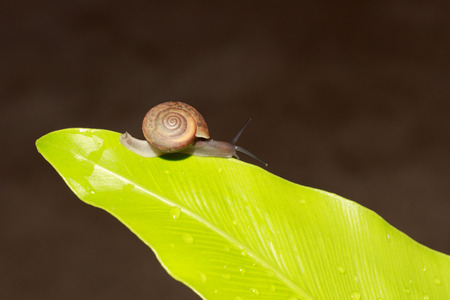 Snails are animals that are often found in moist forests.
