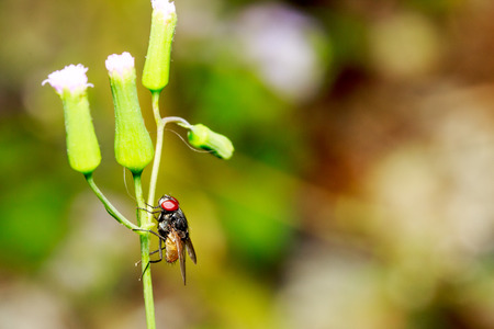 unwashed: The flies are what we often see general area house. Stock Photo