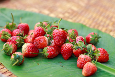 Strawberry berries fresh from lamai garden rayong thailand.