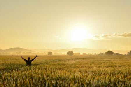 champ de maïs: champ de maïs Banque d'images