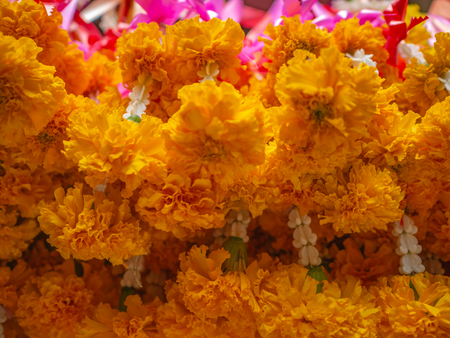 Close up Flower steering in the temple