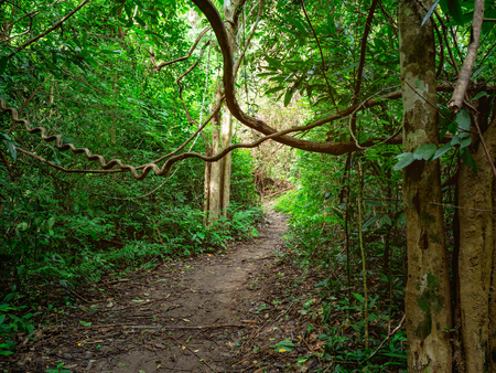 Forest walkway to the top of the Khao Luang mountain in Ramkhamhaeng National Park,Sukhothai province Thailand