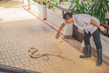 Bangkok/Thailand- 7 October 2017;Snake Show in Thailand Snake Farm bangkok city Thailand